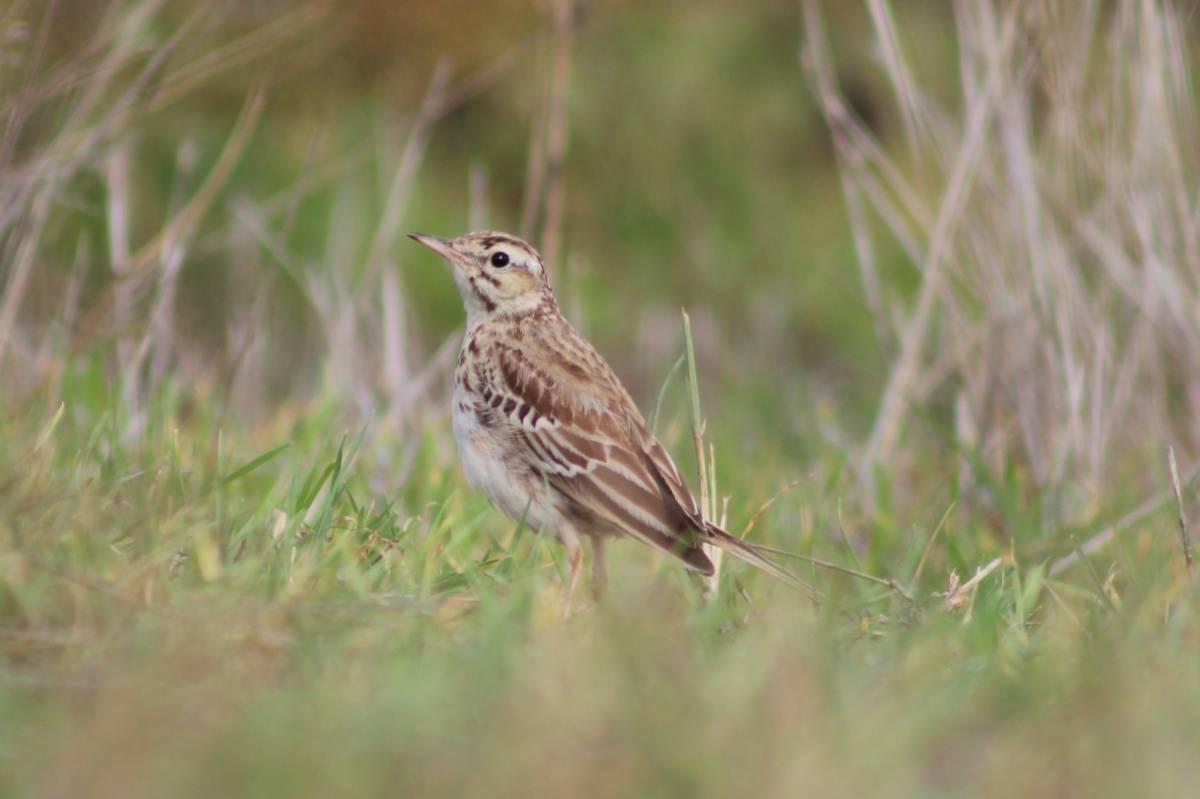 Птицы кировской области фото и название картинки