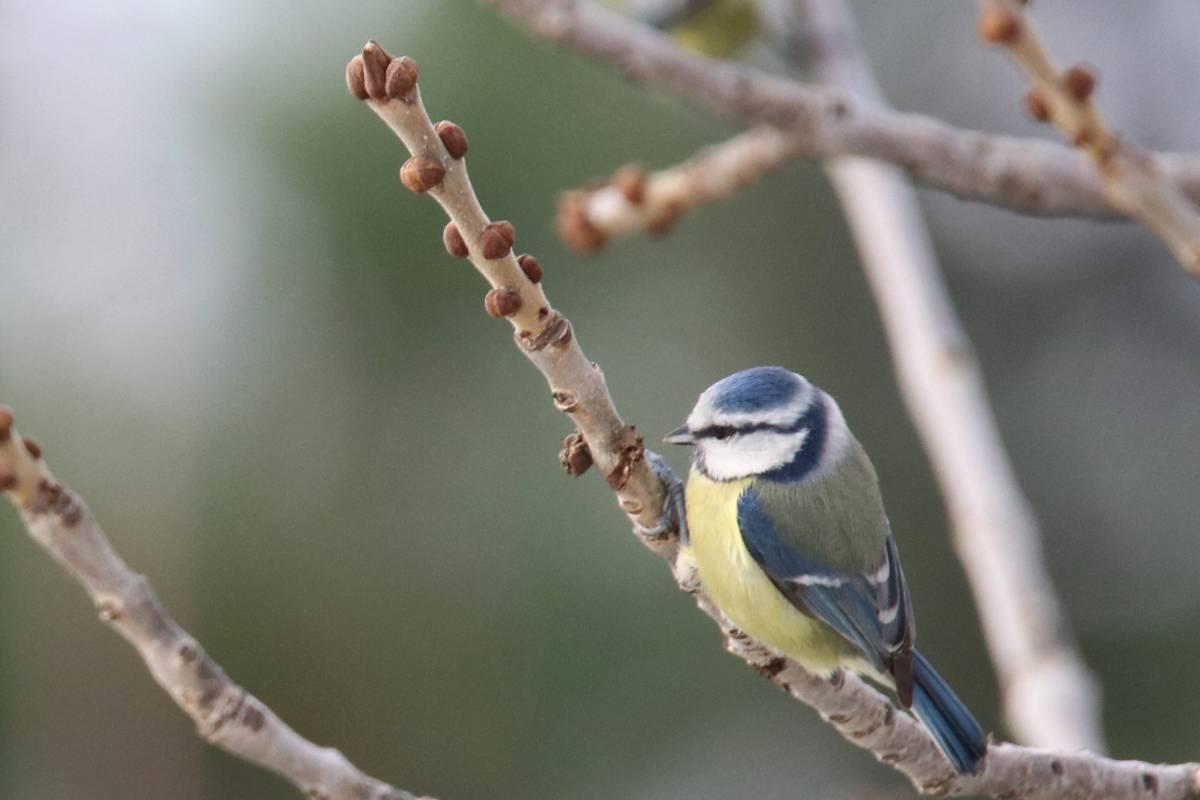 подборка стихов птицы азербайджана фото встречи дают возможность