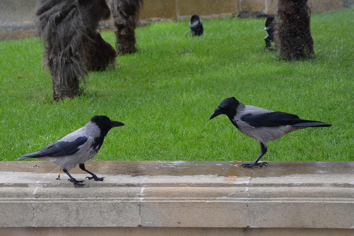 ограждения птицы азербайджана фото нравится, что приняла